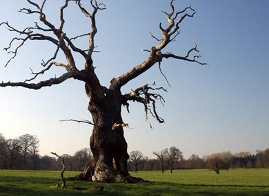 Windsor Great Park Image Copyright Edward Staines