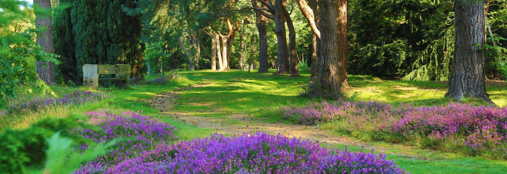 Windsor Great Park's Heather Garden