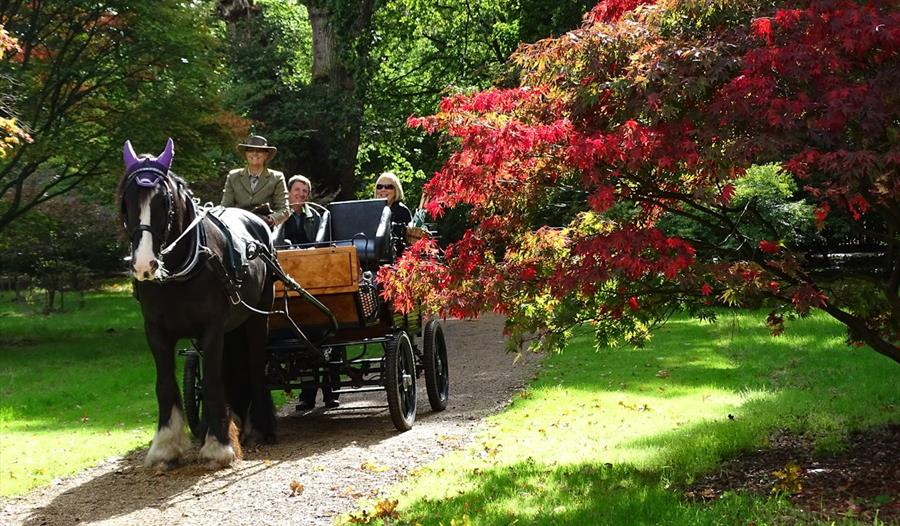 Ascot Carriages: Carriage rides in Windsor Great Park