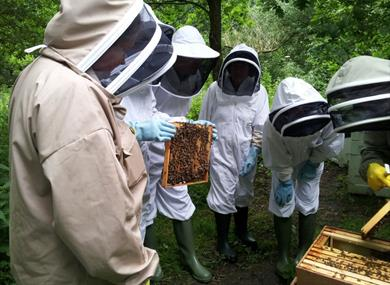 Examining the bees and frames: Meet the Bees Lunches at Great Fosters