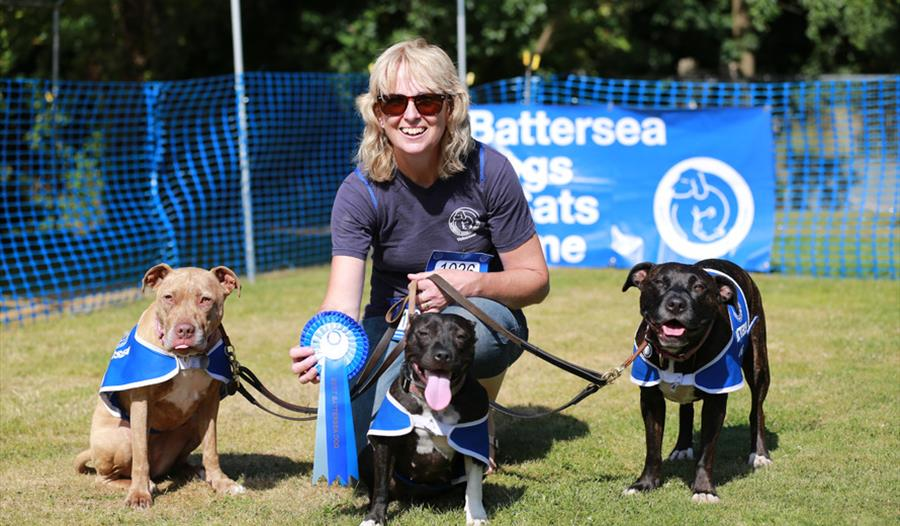 how to get to battersea dogs home