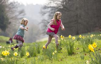 Children running through daffodils at Cliveden in the springtime, image copyright Chris Lacey
