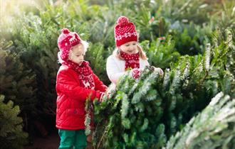 Children and Christmas Trees at Windsor Great Park