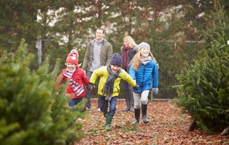 Traditional Christmas Trees for Sale from Windsor Great Park