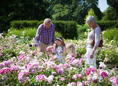 The Power of Flowers at the Savill Garden