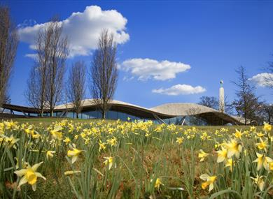 Savill Garden with daffodils in foreground